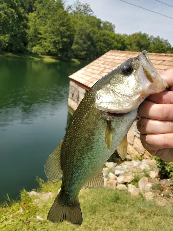 A photo of cody brummitt's catch