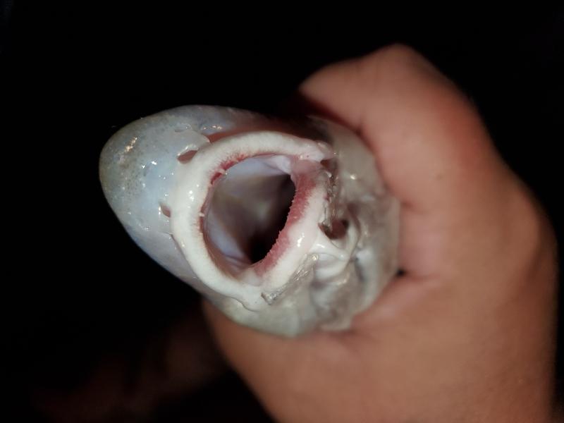 A photo of Bent rods &  Fatcatz's catch