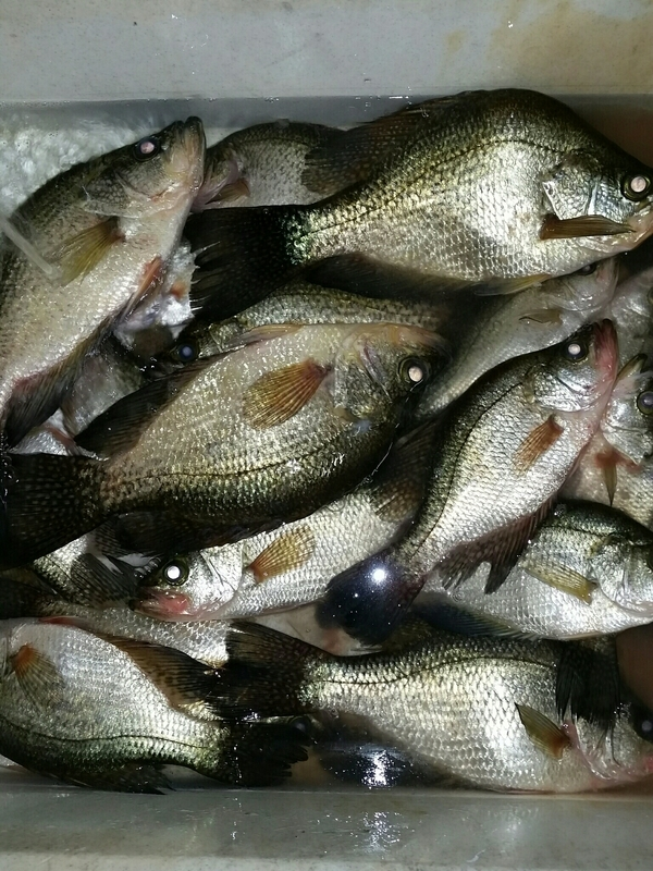 A photo of Rob  Anderson 's catch
