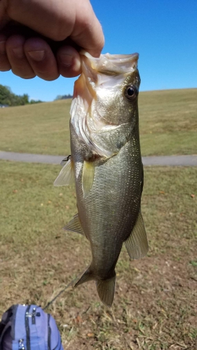 A photo of Jim Holland's catch