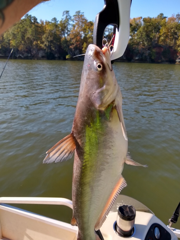 A photo of Jeff Hockingberry's catch