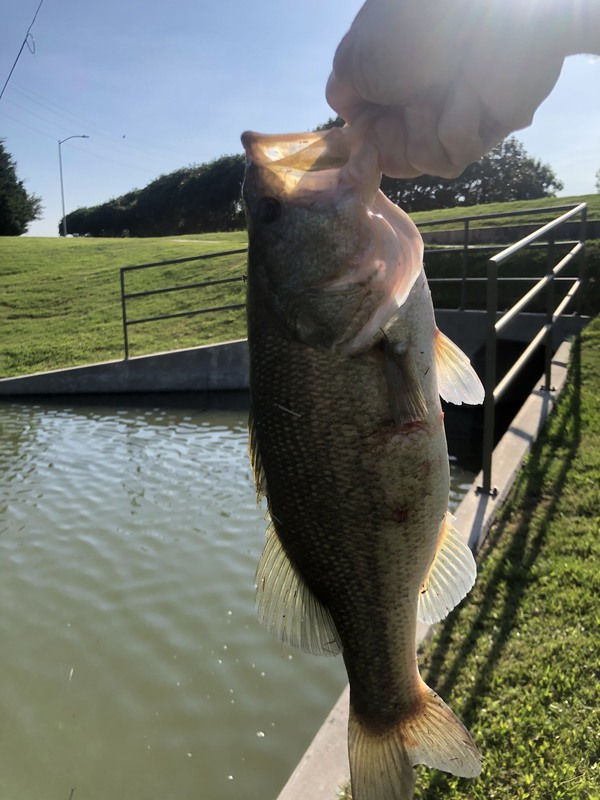 A photo of John Moody's catch
