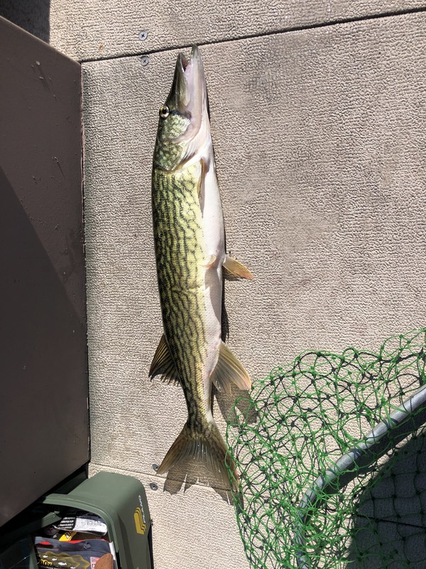 A photo of Mike Morongell 's catch