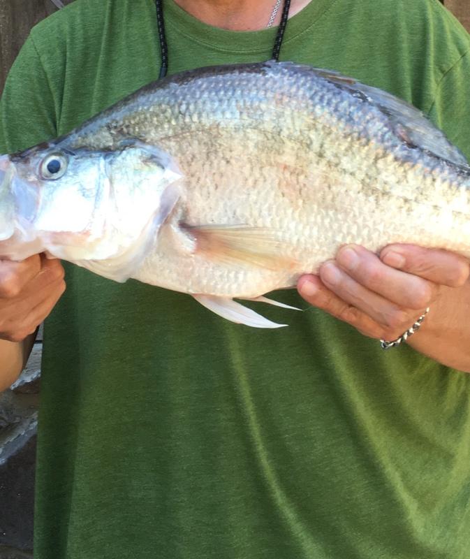 A photo of jim daniels's catch