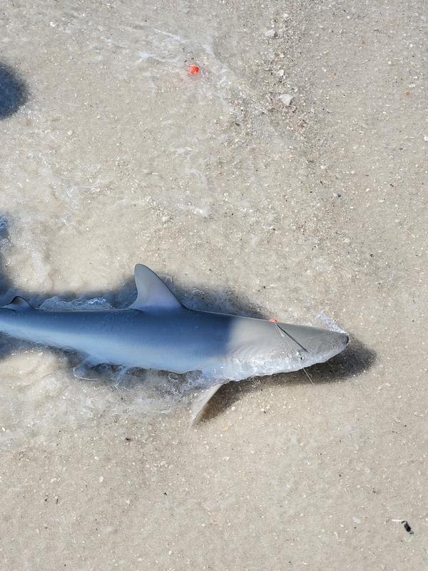 A photo of Aryza  Sampson 's catch