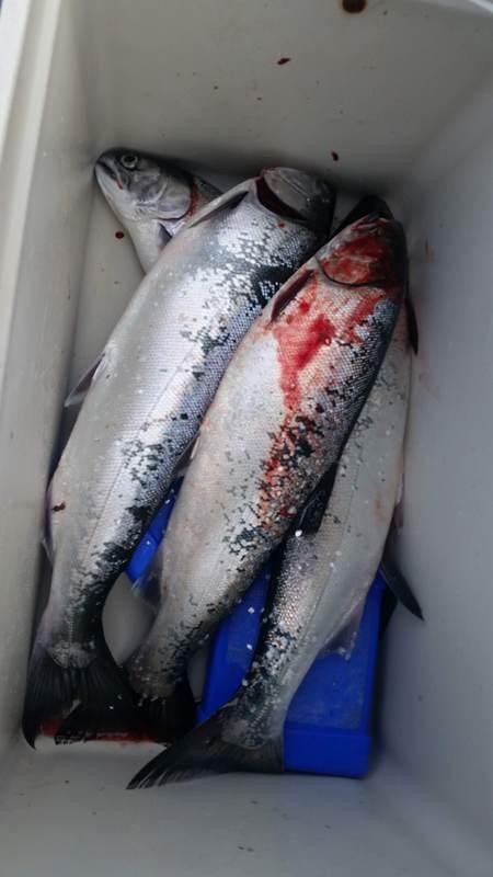 A photo of Roy Da Fishhead's catch