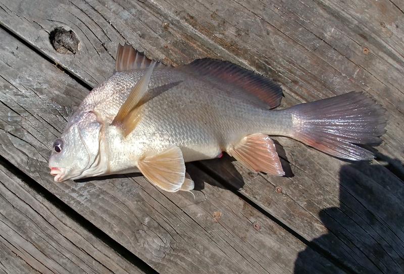 A photo of John OHara's catch