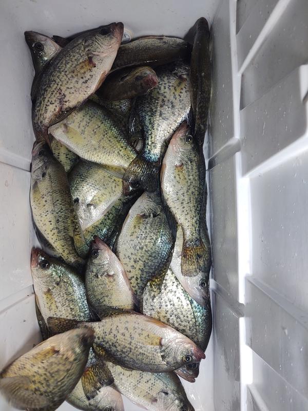 A photo of Steven Murphy's catch
