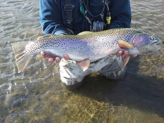 A photo of Jim Bridges's catch