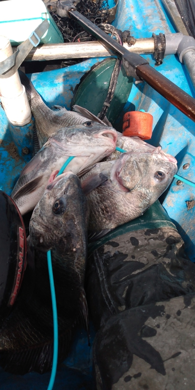 A photo of MICHAEL SCHOTT's catch