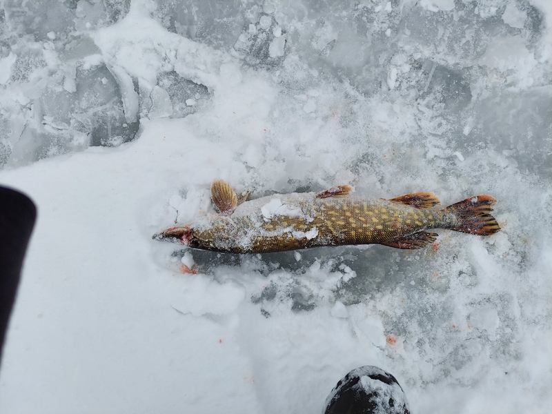 A photo of Kenneth Campfield's catch