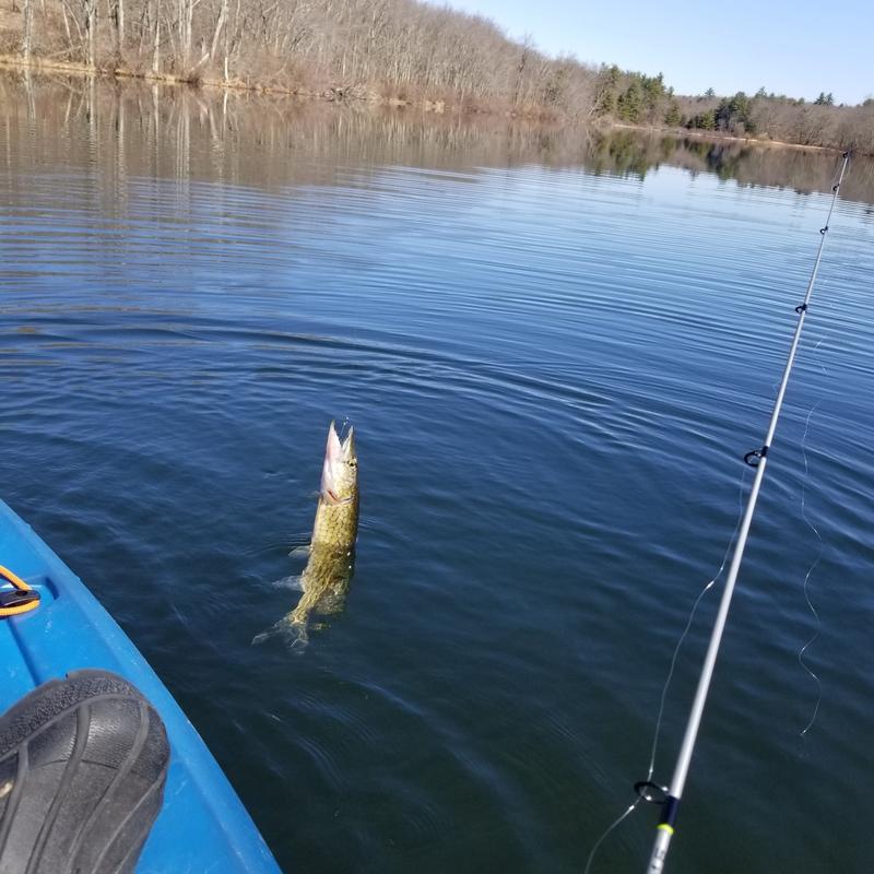 A photo of Bill Brottman's catch