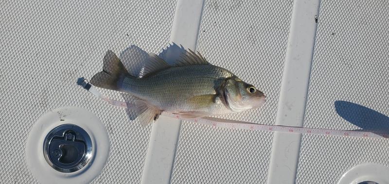 A photo of PJ Scott's catch
