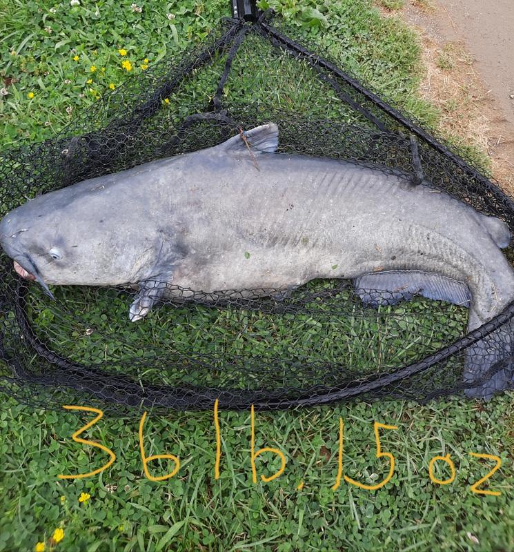 A photo of Christoher Stewart's catch