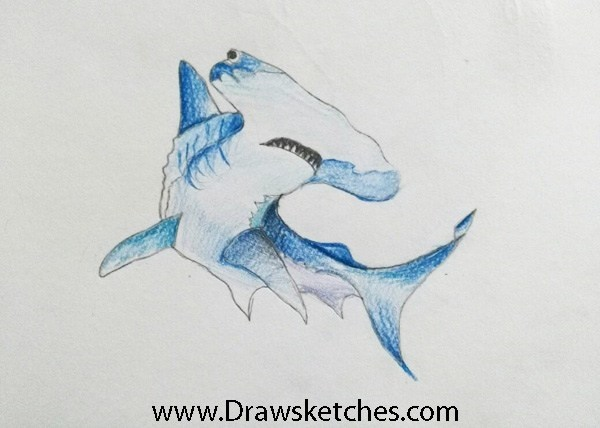 How to Draw a Hammer head shark
