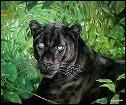 pantera negraaa