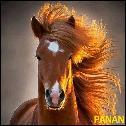 Panann