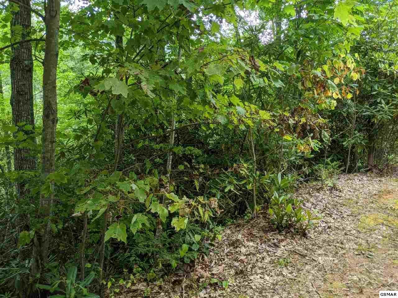 Black Gum Gap Rd, Gatlinburg, TN 37738