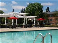 Gorgeous pool & shade lounge!