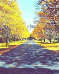 Fall at Apple Creek....Gorgeous driveway!