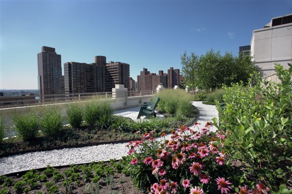 Green Roof Park