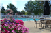 Sterling Lake Apartments & Townhomes, Sterling Heights, MI, Pool