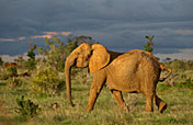 3-Day Masai Mara Kenya Wildbeest Migration Safari Tour