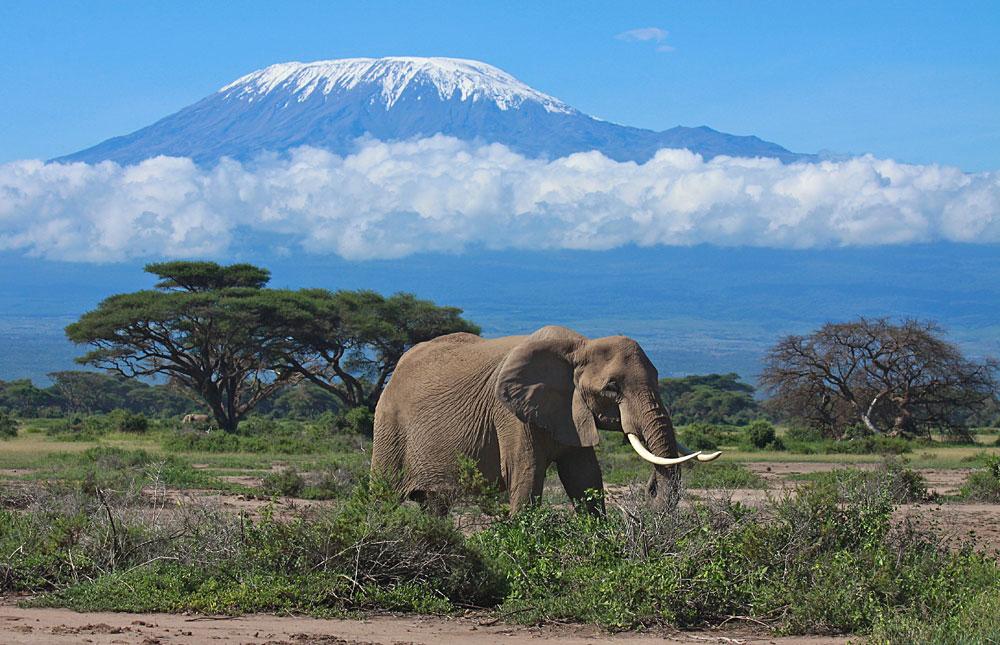 Amboseli National Park Images in Amboseli National Park