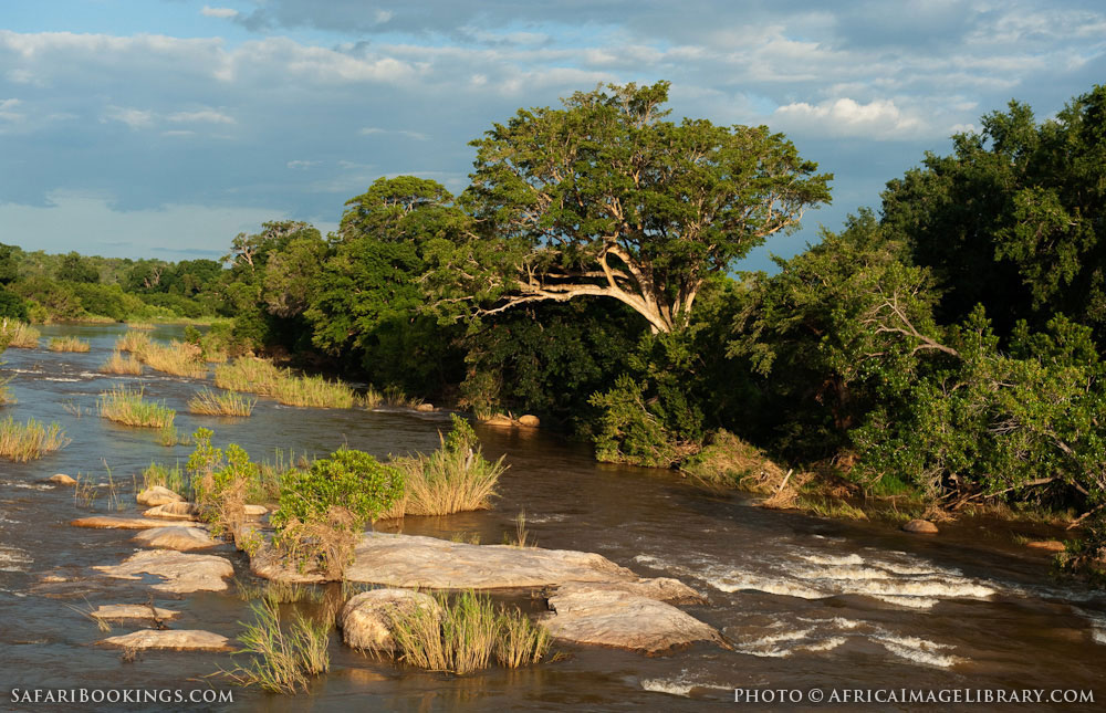 Kruger NP Photos � Images & pictures