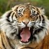 Avatar de ---TIGER---