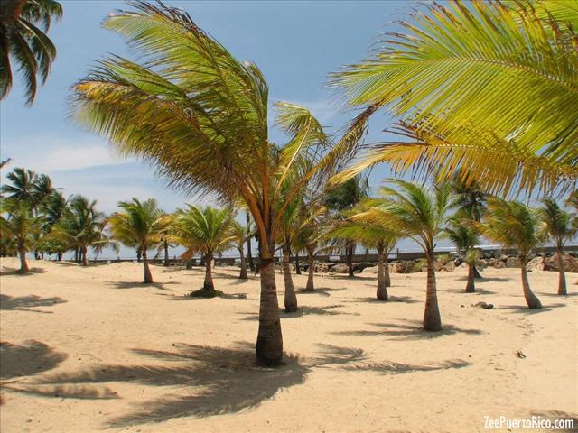 Near the beach cerca de playa - 1 part 5