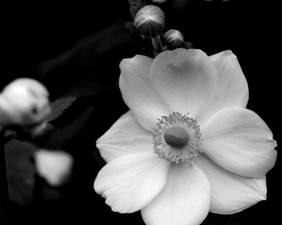 black and white flower art prints wwwpixsharkcom