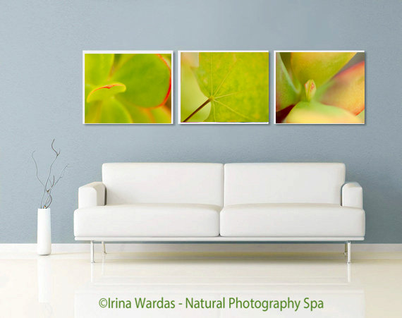Set of 3 Nature Wall Decor Photos | Green Leaf Photography Art
