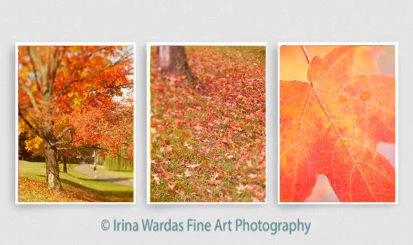 3 piece wall art orange coral red autumn nature photography set of 3 vertical pictures