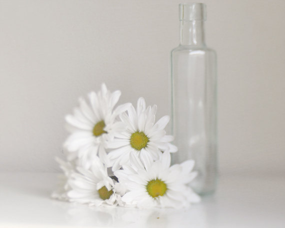 Still Life Flower Photography | White Daisy Bathroom Wall Art Decor