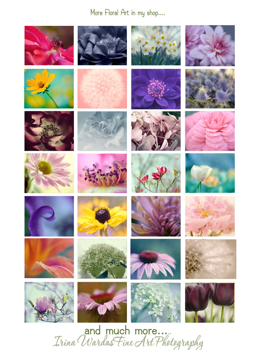 Purple lavender pale blue wall art flower art print floral artwork hydrangea photography purple lavender pale blue wall art flower art print floral artwork amipublicfo Image collections