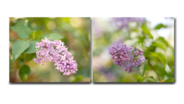 Lilac Canvas Set Of 2, Light Purple Room Decor Canvas Wall Art Two Canvas  Wrap