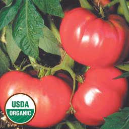 uprising seeds tomatoes