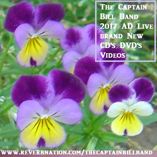 The Captain Bill Band 2019 2025 Ad Live Musicians
