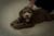 puppy training, puppy kindergarten, rio gran training academy