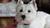 dog training, dog obedience, rio gran training academy