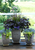 master gardener, design recipe, quality plants, container design, striking color, professional photographer, color combinations, container gardens, container garden, pizzazz, riedel, mero, five months, novice, containers, colors, images