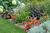 perennial plants, annuals, images, photos, garden plant