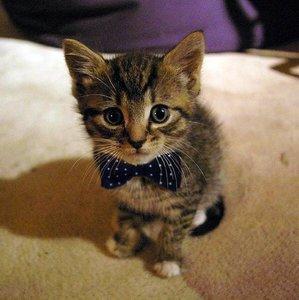 Catcuter