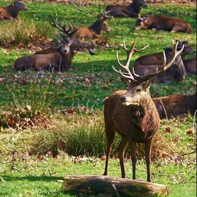 Wildlife in London