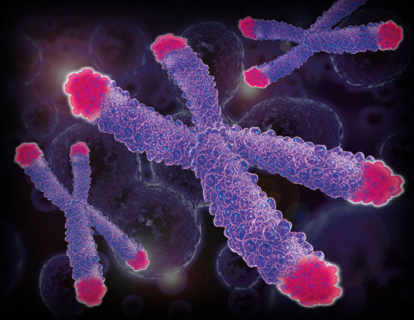 Telomeres: Insights into Aging