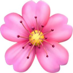 Chronological Cherry Blossom