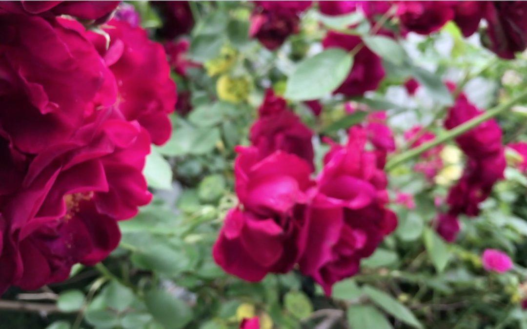 {video} David Scott Leibowitz ~ In The Garden