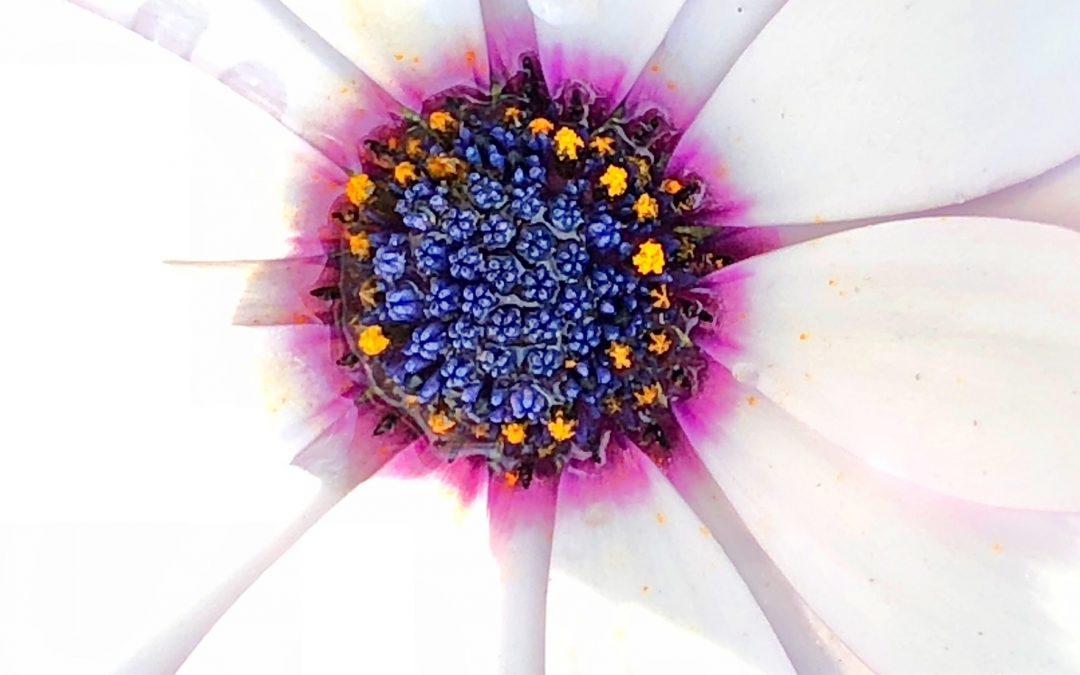 Susan Rennie ~ Micro sos mos | Garden in a daisy