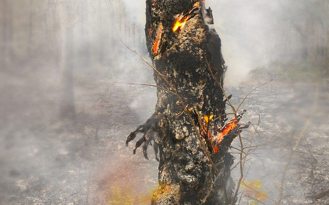 "Stan Wakefield ~ ""Burning Man"" – Pine Tree On Fire – Palm Coast, FL (USA)"